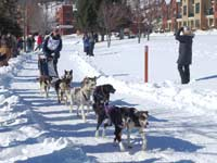 UP 200 Dog Sled Race Marquette Michigan