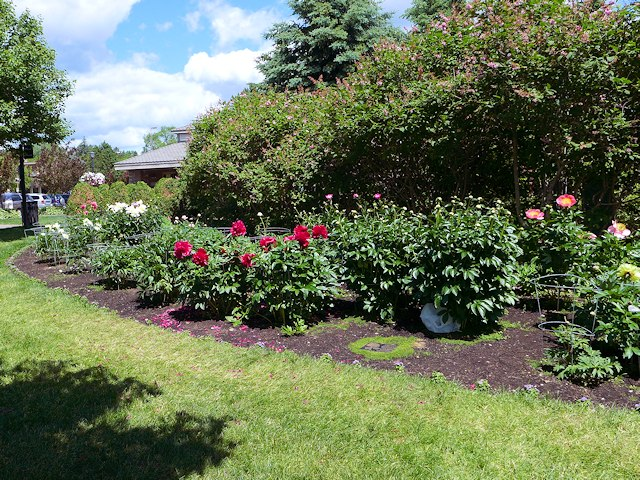 Duluth Mn Rose Garden Lakewalk Duluth Min
