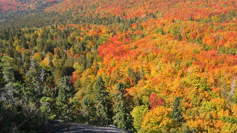 Moose Mountain Fall Color