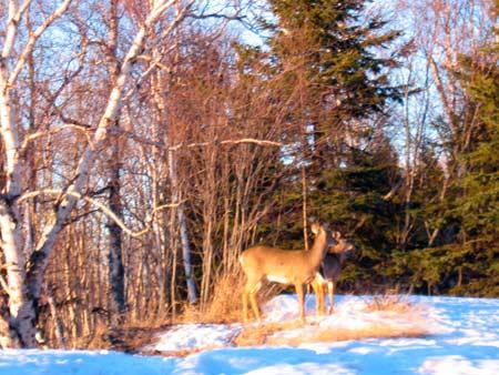 Winter Holiday Recreation Upper Peninsula Michigan